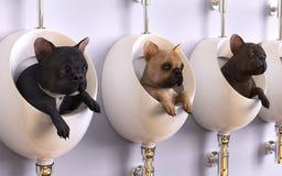 3d bulldog francese dell'illustrazione tre in tre bidet Immagini Stock