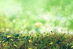 3D buttercups and grass on a bokeh lights background Royalty Free Stock Photography