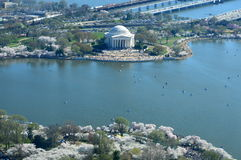 D C Cherry Blossoms och Jefferson Memorial arkivbilder