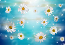 3D Camomile. Many daisies on a blue background. Volumetric background Stock Image