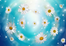 3D Camomile. Many daisies on a blue background. Volumetric background Royalty Free Stock Photos