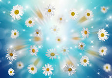 3D Camomile. Many daisies on a blue background. Volumetric background Stock Images