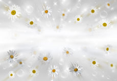3D Camomile. Many daisies on gray background. Volumetric background Stock Image