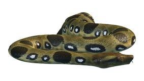 3D che rende anaconda verde su bianco Immagini Stock