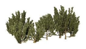 3D che rende gli alberi verdi di Mulga su bianco Fotografie Stock Libere da Diritti