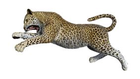 3D che rende grande Cat Leopard su bianco Immagine Stock