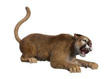 3D che rende grande Cat Puma su bianco Fotografia Stock Libera da Diritti