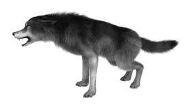 3D che rende Gray Wolf su bianco Fotografia Stock Libera da Diritti