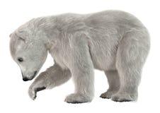 3D che rende il cucciolo dell'orso polare su bianco Fotografie Stock Libere da Diritti