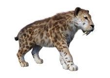 3D che rende la tigre di Sabertooth su bianco immagine stock libera da diritti