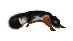 3D che rende lo scoiattolo di Prevost su bianco Fotografie Stock