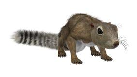 3D che rende lo scoiattolo gambiano di Sun su bianco Fotografia Stock