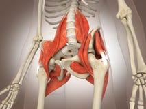 3D che rende organo interno intestinale illustrazione vettoriale