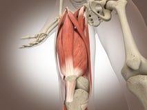 3D che rende organo interno intestinale illustrazione di stock