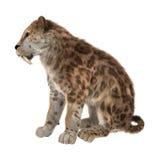 3D che rende Saber Tooth Tiger su bianco Fotografia Stock