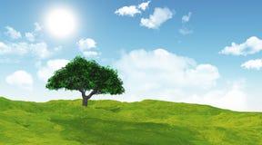 3D cherry tree in a grassy landscape. 3D render of a cherry tree in a grassy landscape Stock Images