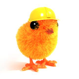 3d Chick wearing a builders hat Stock Photos