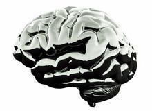 3D chrome metallic brain on white background. 3D Illustration royalty free illustration