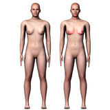 3d ciała ludzkiego ilustracyjni płuca Obrazy Stock