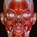 3d ciała ludzkiego ilustracyjna twarz Fotografia Royalty Free