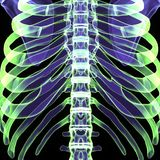 3d ciała ludzkiego ilustracyjni ziobro Obraz Stock