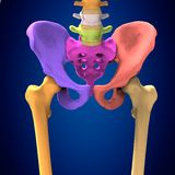 3d ciała ludzkiego ilustracyjny hib Zdjęcia Stock