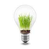 3d close up image of green grass inside a light bulb. On white Royalty Free Stock Photography