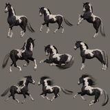 Gypsy Vanner Horse, 3d CG Royalty Free Stock Photo