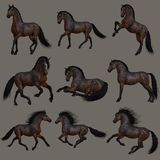 Mahogany Bay Horse, 3d CG Royalty Free Stock Images