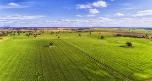 D Corn Field flat blue sky Stock Photos