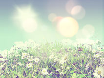 3D daisies in grass Royalty Free Stock Image