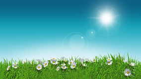 3D daisies in grass sunny sky Stock Photography