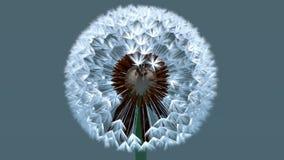 3d Dandelion - Heart Shape Royalty Free Stock Photo