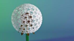 3d Dandelion Royalty Free Stock Image