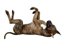 3D, das Brindle Grat Dane Dog auf Weiß überträgt lizenzfreie stockfotos