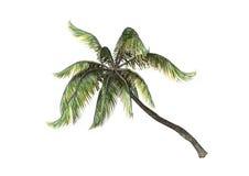 3D, das Coconats-Palmen auf Weiß überträgt Stockbild