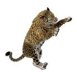 3D, das große Cat Jaguar auf Weiß überträgt Stockbild
