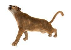 3D, das große Cat Puma auf Weiß überträgt Lizenzfreies Stockfoto
