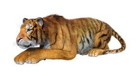 3D, das große Cat Tiger auf Weiß überträgt stockbilder