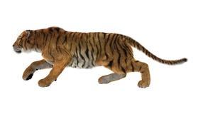 3D, das große Cat Tiger auf Weiß überträgt Lizenzfreies Stockfoto