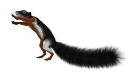 3D, das Prevost-Eichhörnchen auf Weiß überträgt Lizenzfreie Stockbilder