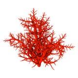 3D, das rote Koralle auf Weiß überträgt lizenzfreie stockfotos