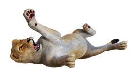 3D, das weiblichen Löwe auf Weiß überträgt Stockfoto