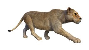 3D, das weiblichen Löwe auf Weiß überträgt stockbilder