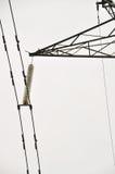 3D de elektriciteit van de hoogspanning Stock Foto's