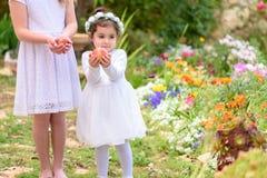 D?a de fiesta jud?o Shavuot Las ni?as de HarvestTwo en el vestido blanco sostienen una cesta con la fruta fresca en un jard?n del fotografía de archivo