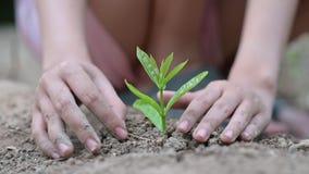 D?a de la Tierra del ambiente en las manos de los ?rboles que crecen alm?cigos Bokeh pone verde la mano femenina del fondo que so metrajes