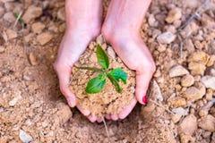 D?a de la Tierra del ambiente en las manos de los ?rboles que crecen alm?cigos imagen de archivo