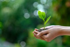 D?a de la Tierra del ambiente en las manos de los ?rboles que crecen alm?cigos ?rbol femenino de la tenencia de la mano del fondo imagen de archivo libre de regalías