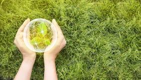 D?a de la Tierra en las manos de los ?rboles que crecen alm?cigos El concepto de ahorro del mundo y de la innovación, muchacha qu foto de archivo